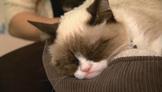 SXSW 2013: Grumpy Cat!