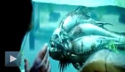 Piranha 3-D Teaser Trailer
