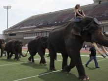 Elephant Herd Vanish